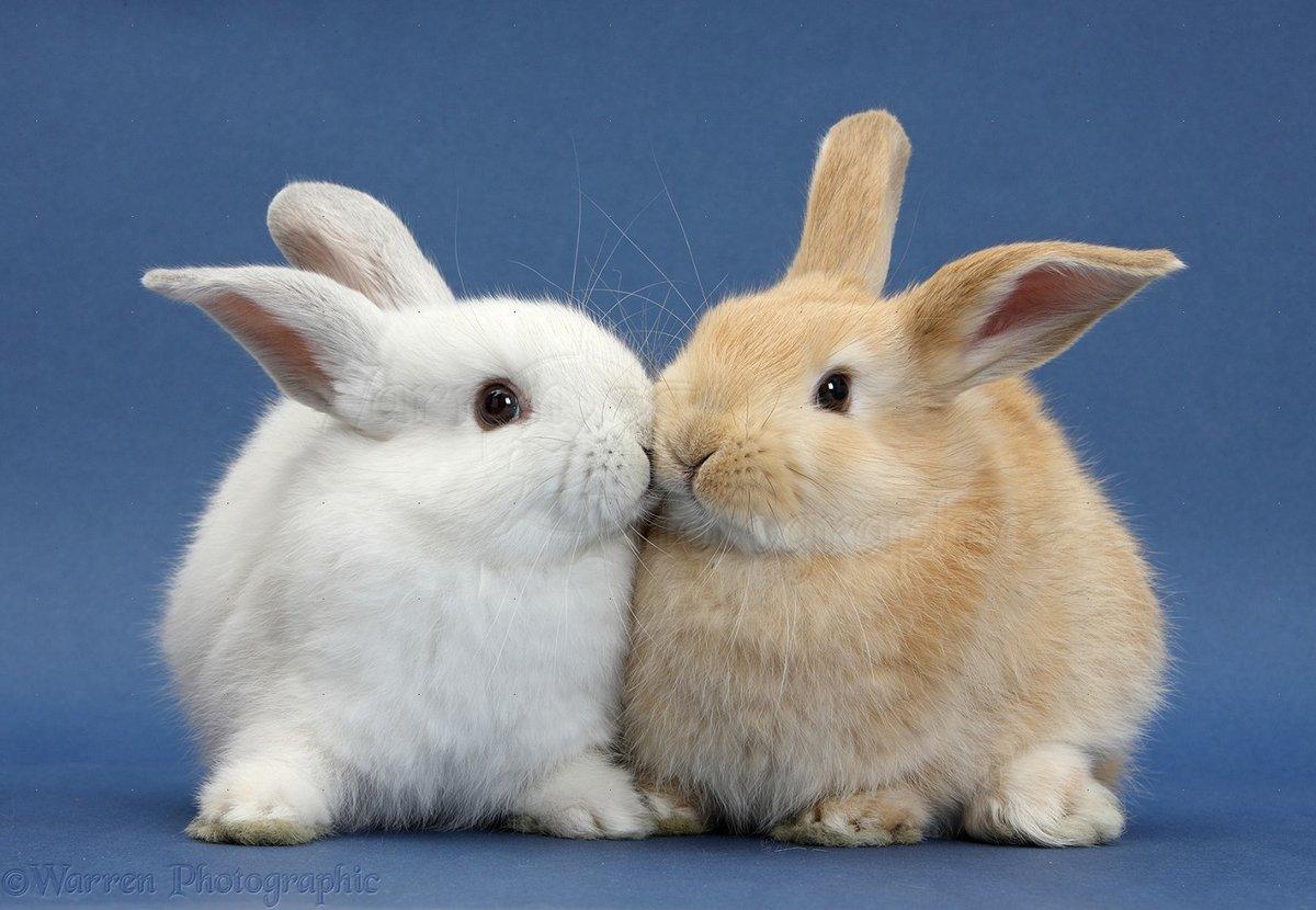 Картинки целующихся зайчиков