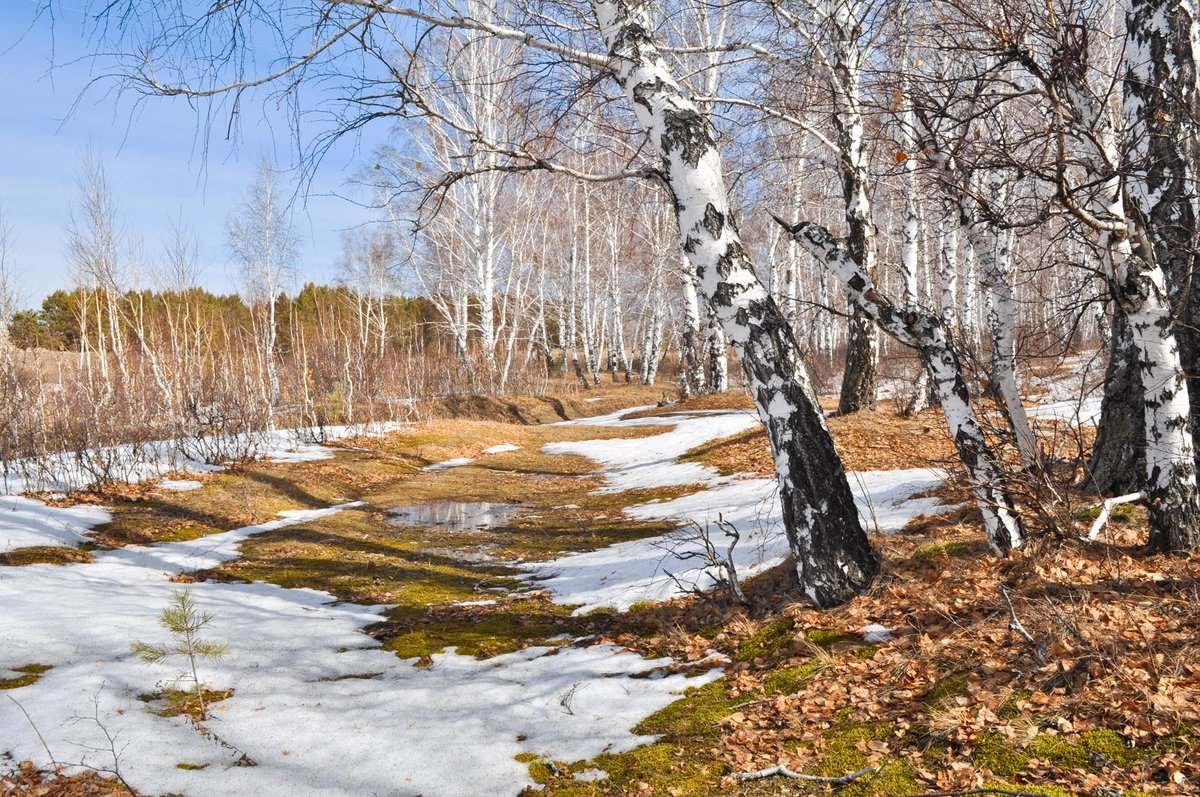 Каска, картинки весна в лесу детям