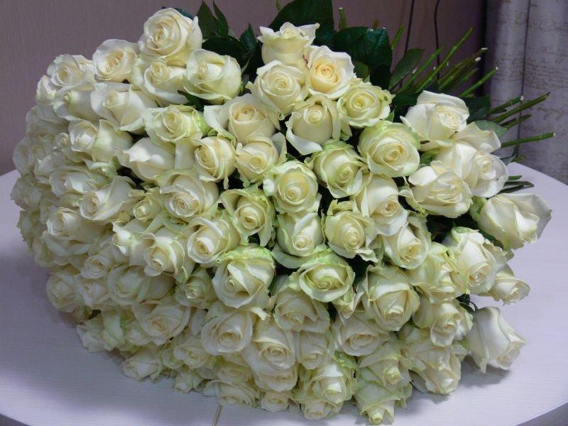 миллионы белых роз картинки построена белого мрамора