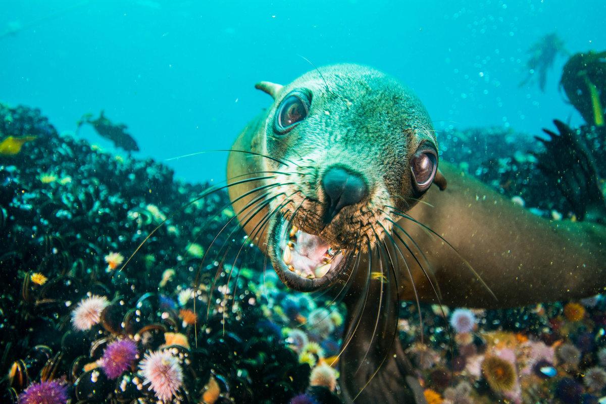 Картинки о животных морских