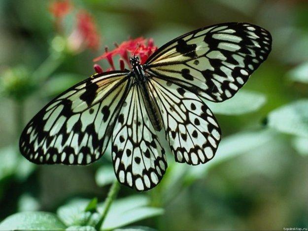 Открытка «Бабочка на цветке» » Сделай сам 8