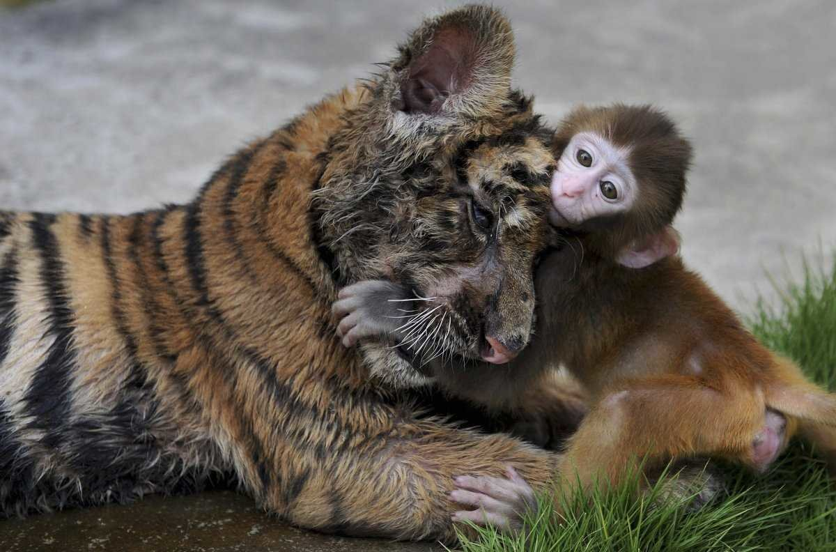 Картинка с поддержкой подруги смешные со зверями
