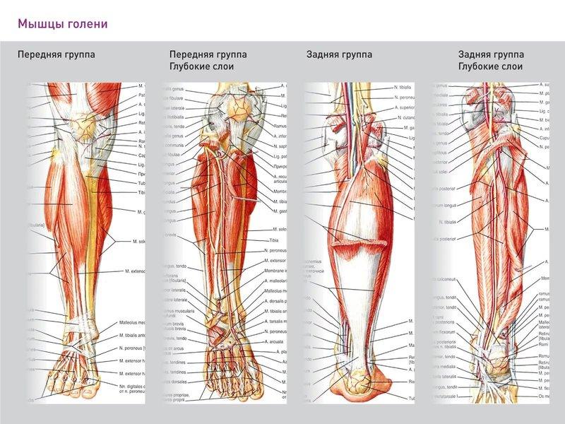 Мышечные боли в ногах (Миалгия), лечение от боли в мышцах и ...