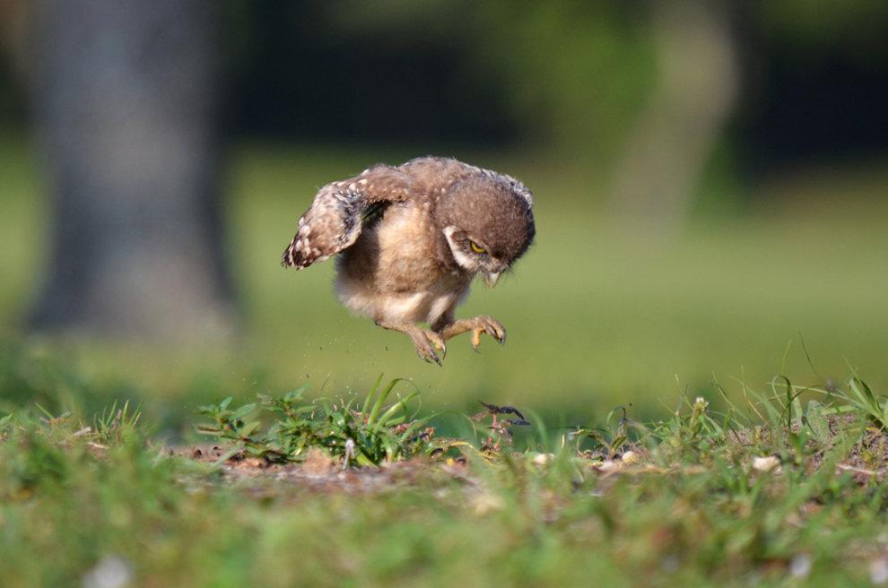 Птенцы смешные картинки