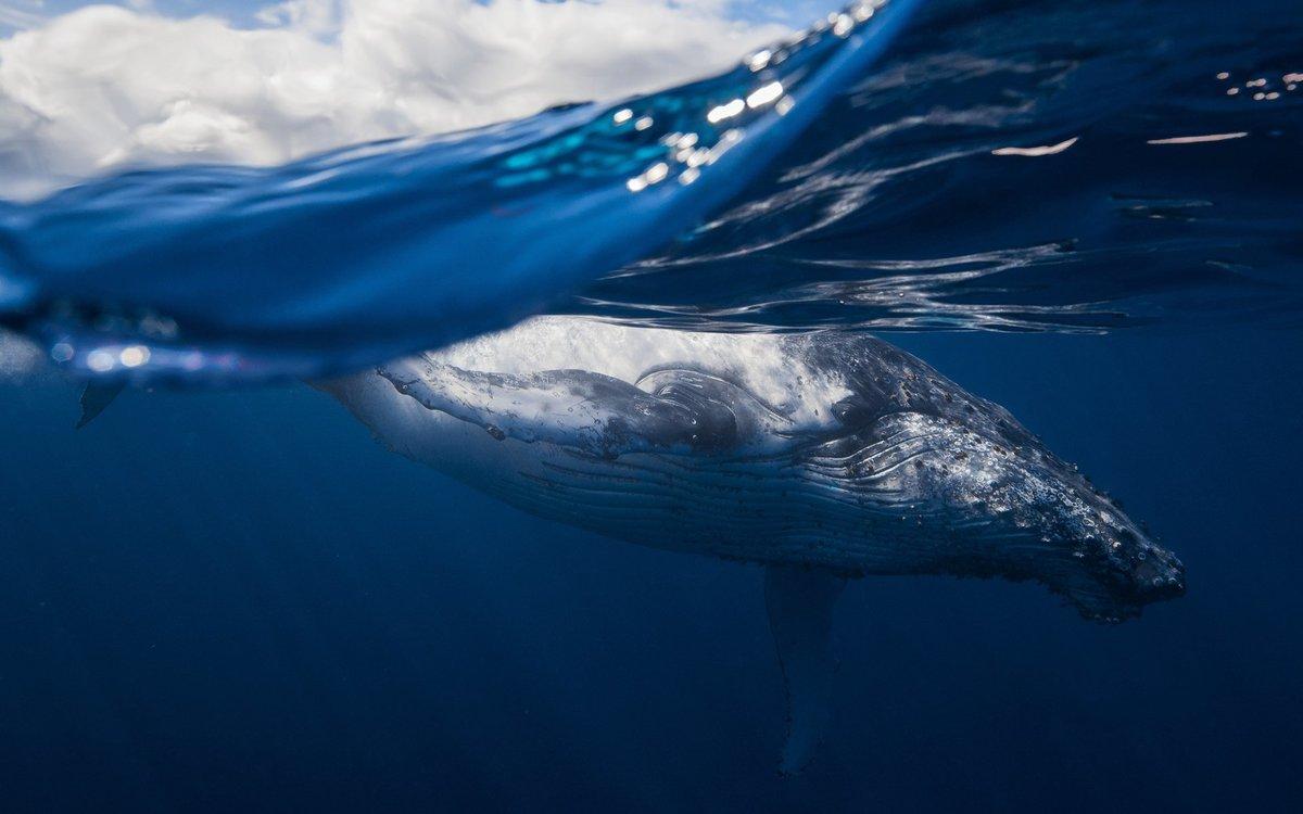 Фото кита морского