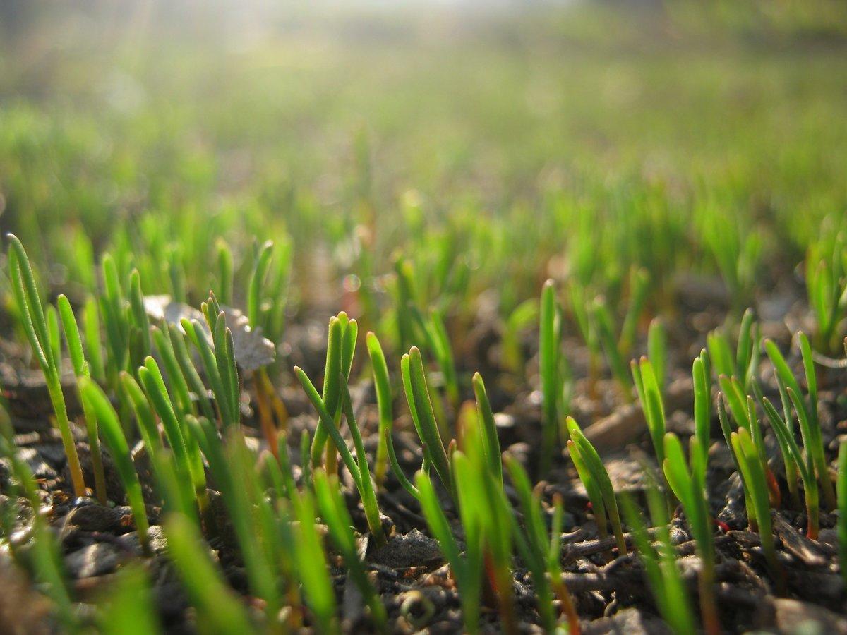 Картинка с травой весной