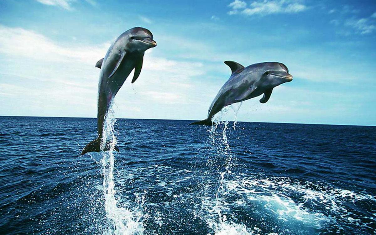 Картинки с морем и дельфинами, японка картинки