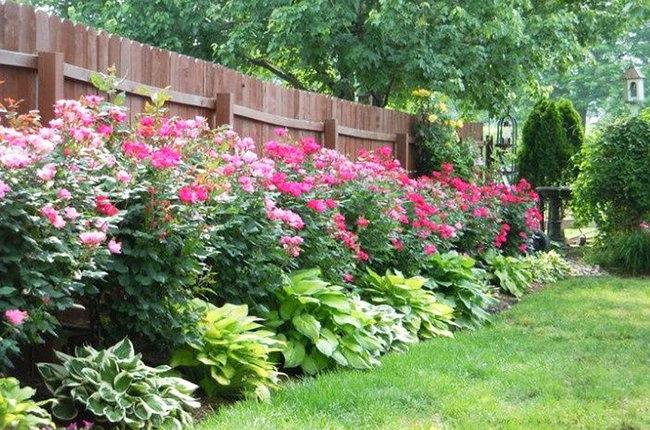Оформите дачный участок по периметру, вдоль забора. Для этого можно использовать пионы или цветущие кустарники. Так весь двор частного дома будет выглядеть восÑитительно.
