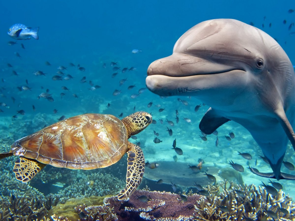 Картинки животные морей
