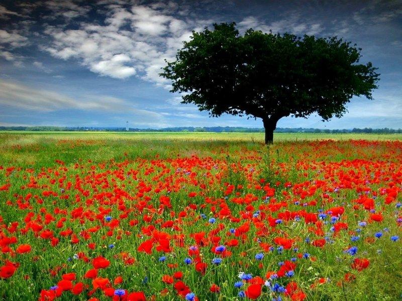 фото летнего цветочного  поля