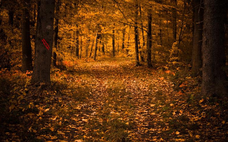 Осень, лес, листья, листопад,