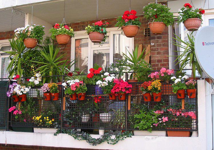 дипладения уход на балконе продажу Новосибирская