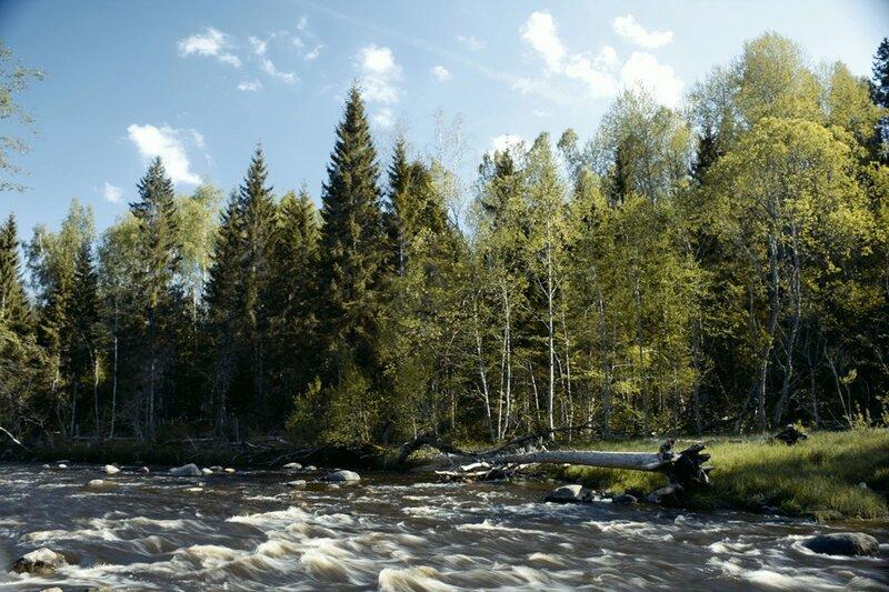 Природа Латвии. — DRIVE2