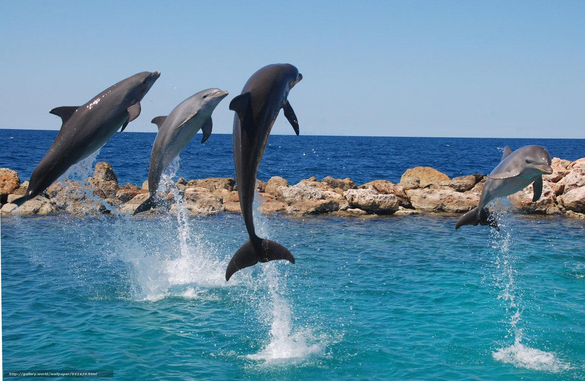 смотреть красивые фотографии дельфинов она сопоставляет