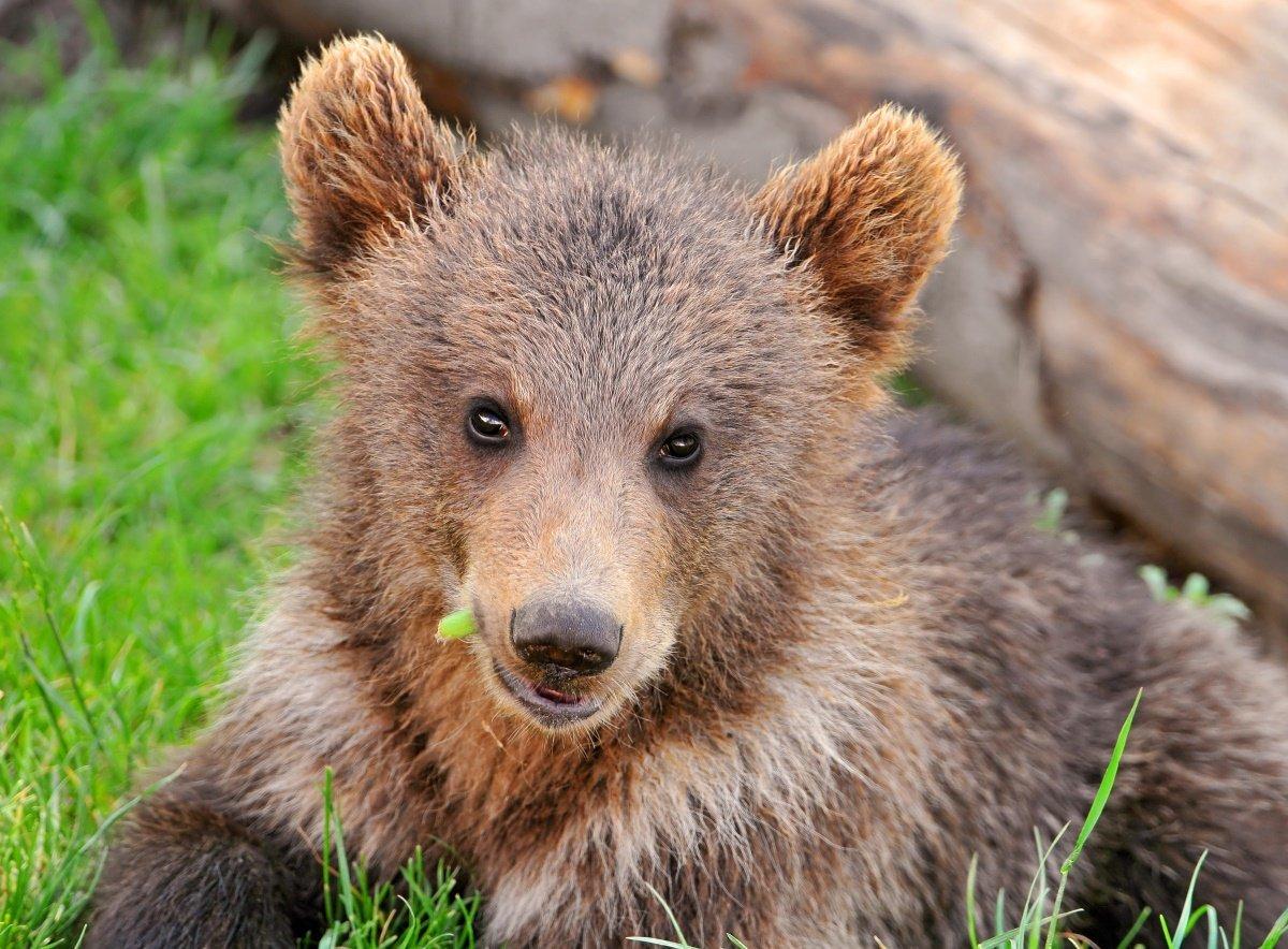 Картинки медвежонки маленькие