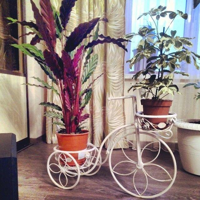 оригинальные вазоны с растениями иногда способны заменить целый комплект мебели