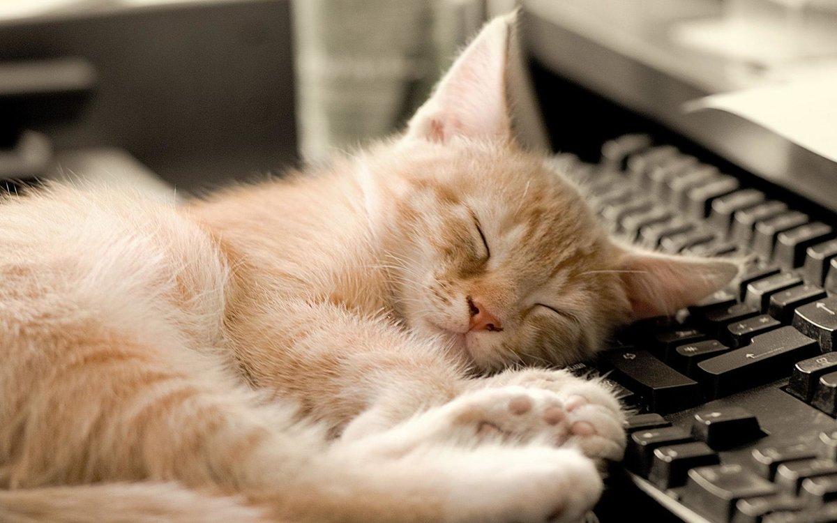 Прикольная картинка засыпаю, контурная аппликация