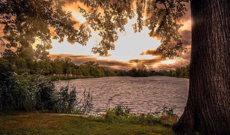 Рассвет над лесным прудом