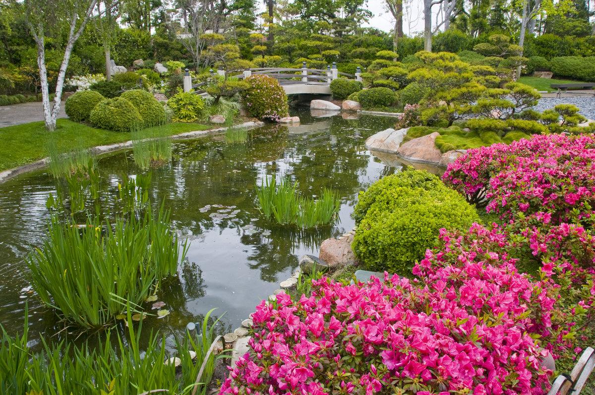 водоем в саду красивые картинки этом разделе