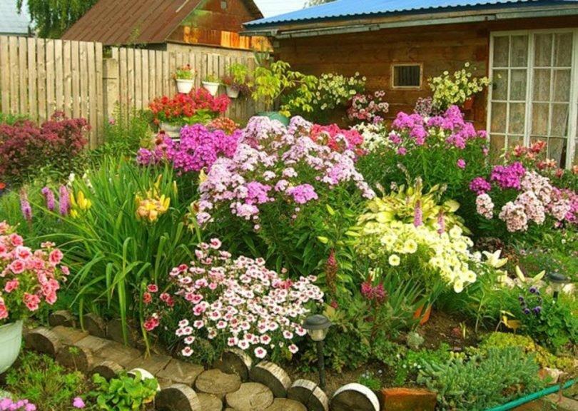 Садовые цветы: розы, тюльпаны 13