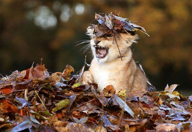 Смешные картинки про октябрь, открытка