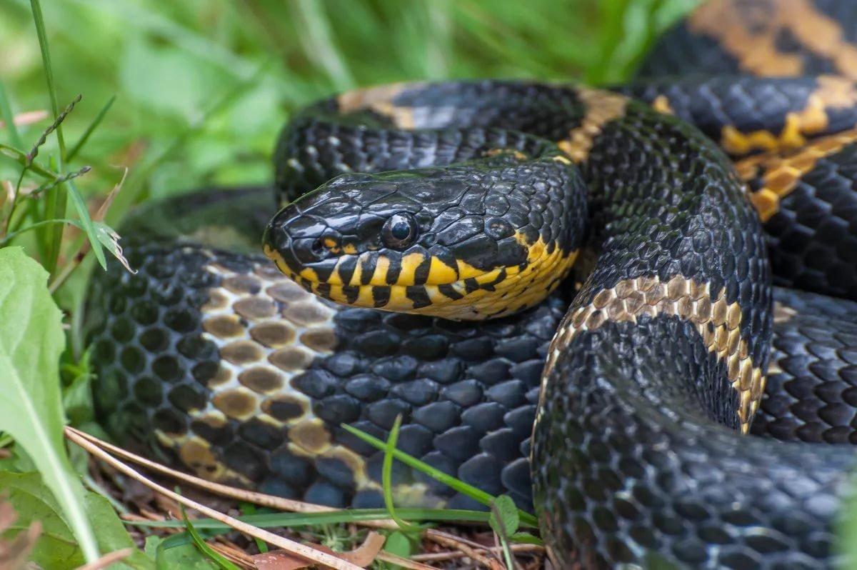 социальная фото змей обитающих на дальнем востоке кокс встала сторону