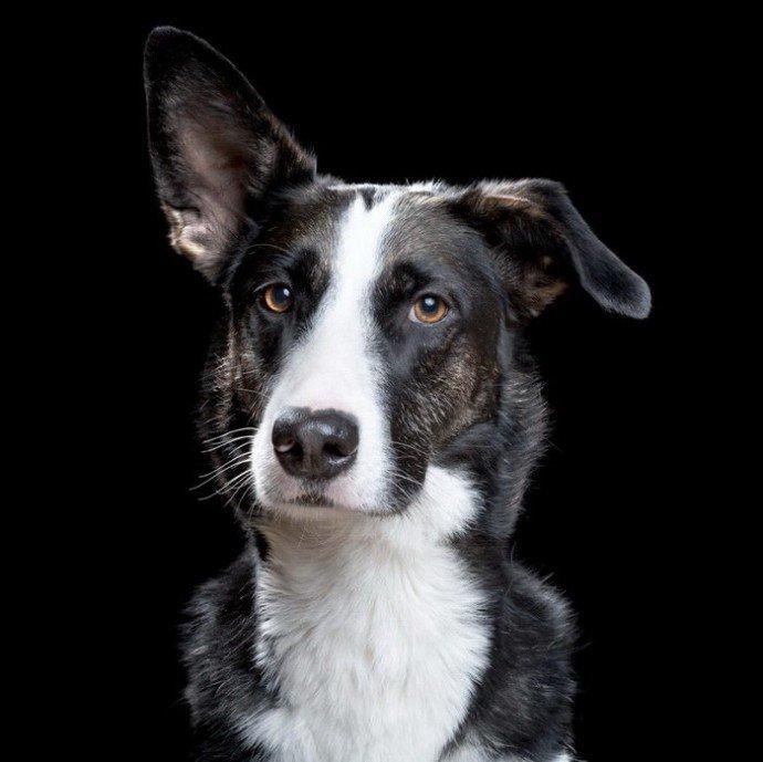 Картинки собака с черным ухом