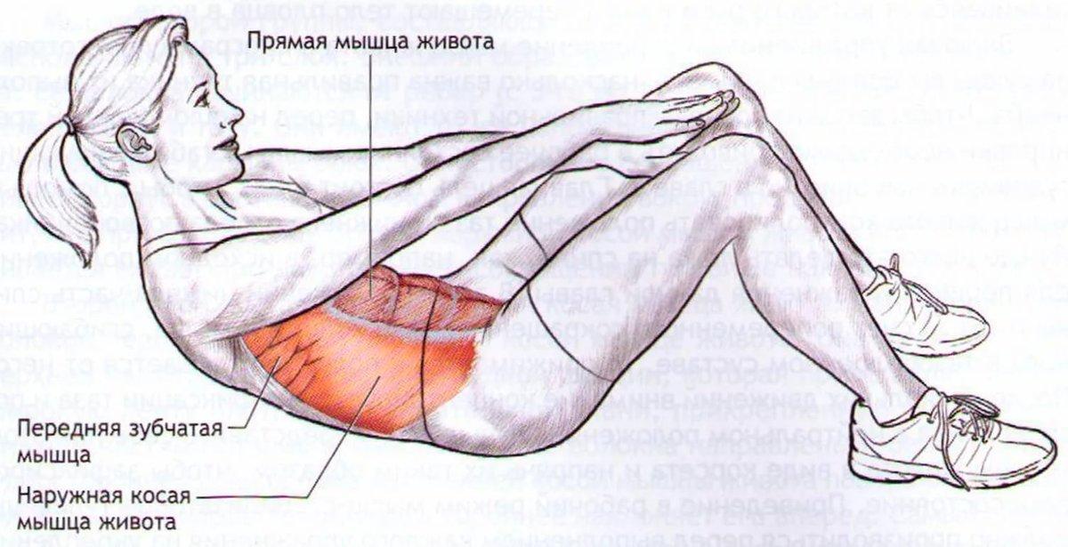 Упражнения для всех мышц живота в картинках