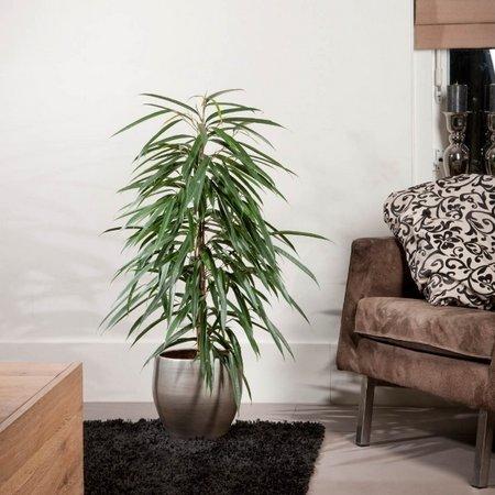 Цветы преобразят любое помещение, помогут сделать его более уютным
