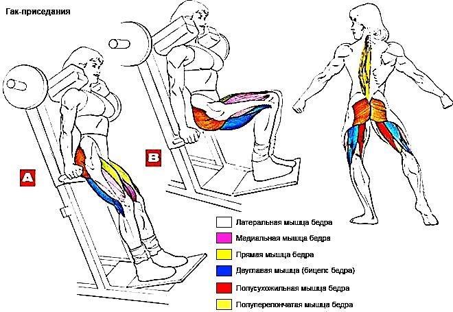 Какие мышцы задействованы при работе на тренажере платформе