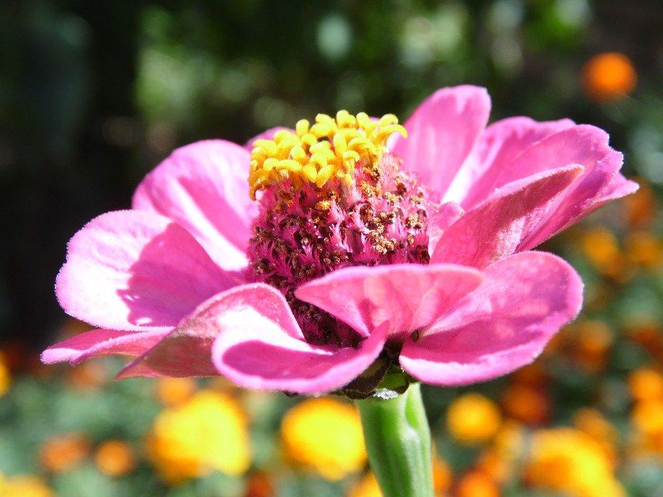 Фото летние цветы в природе 9