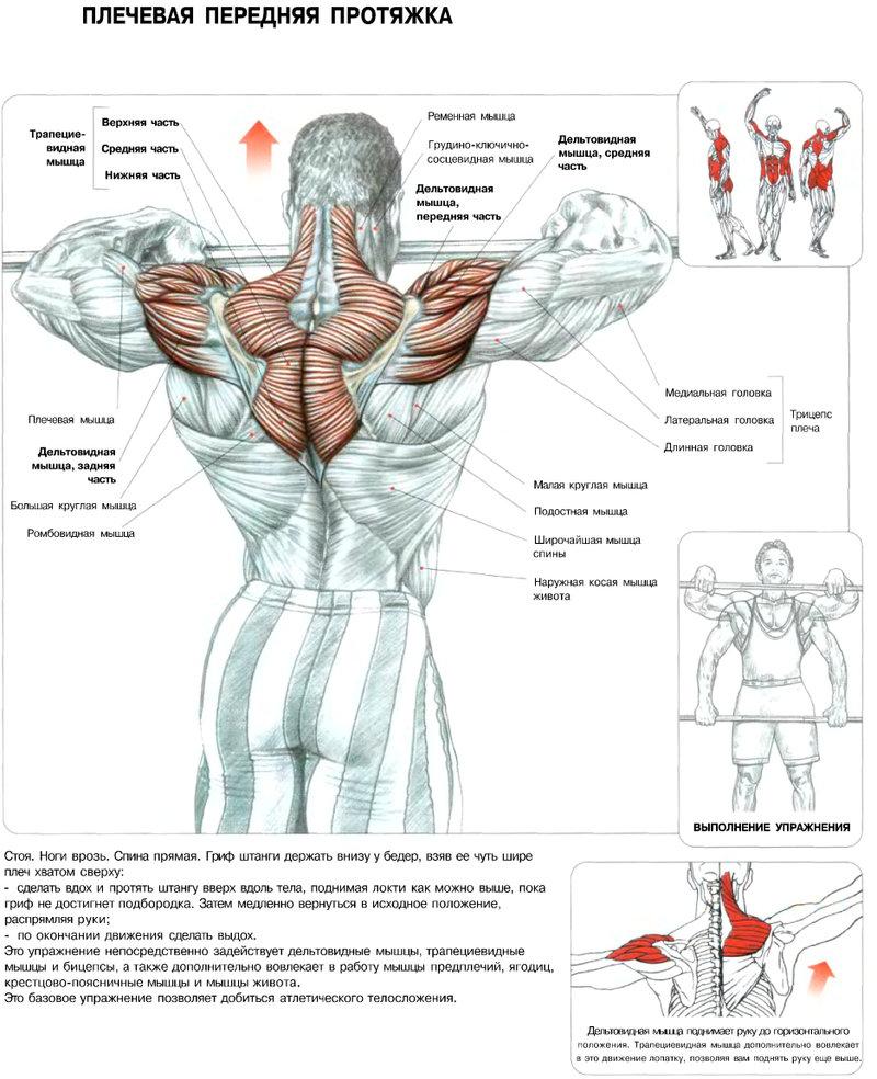 Плечевая передняя протяжка для задних дельт
