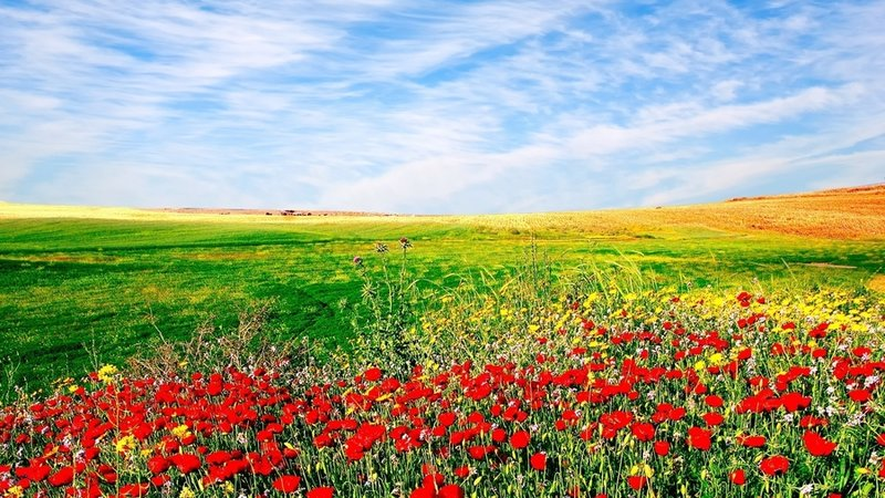 лето.поле.цветы