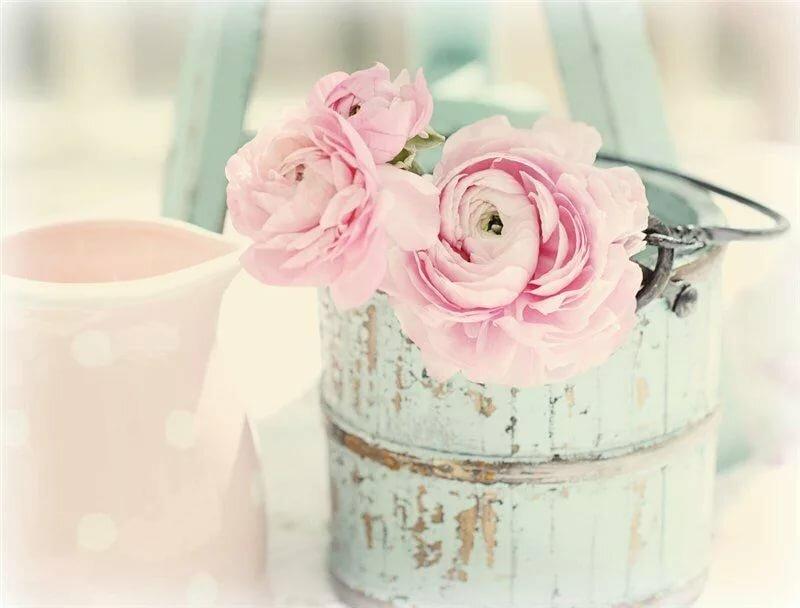 Ванильные картинки роз
