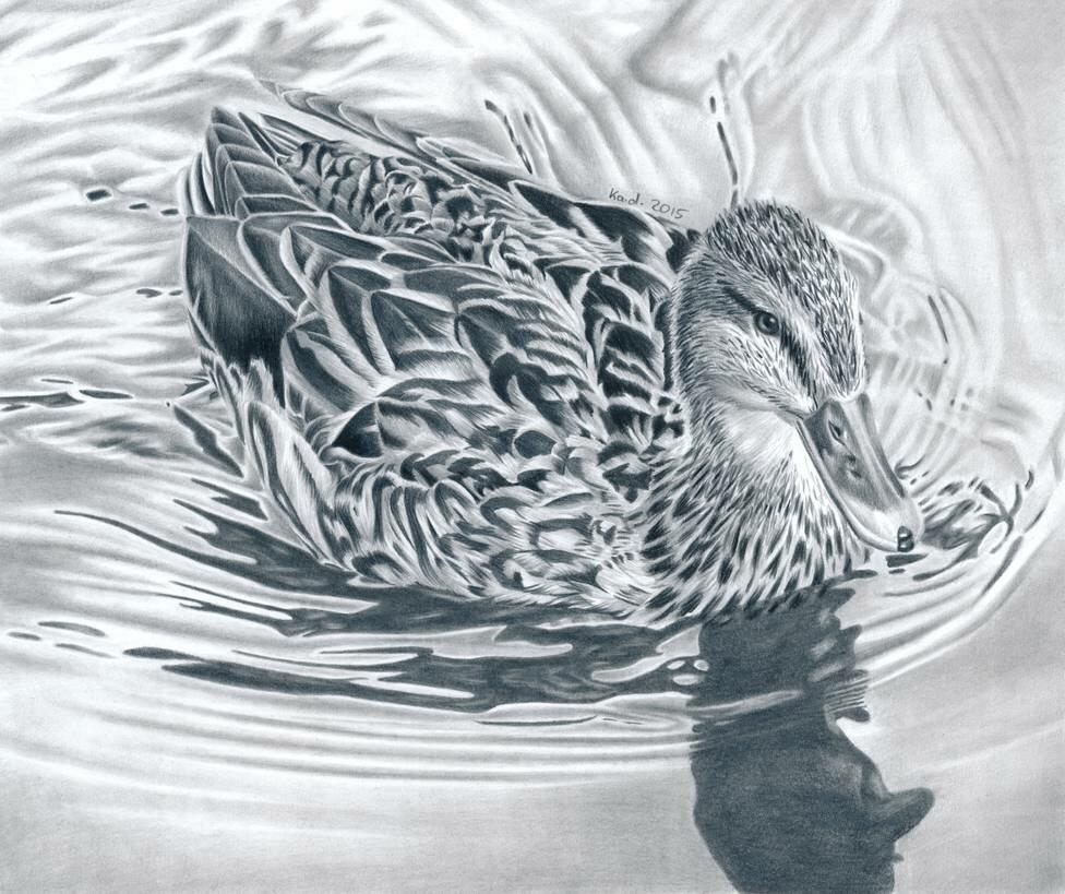 картинки диких птиц простым карандашом великая