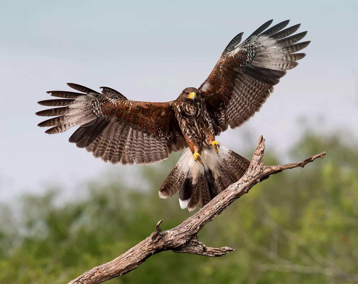 как скопировать фотографии хищных птиц своем архиве