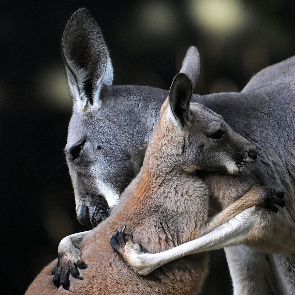 Смешные фото о дружбе животных бесплатные фото