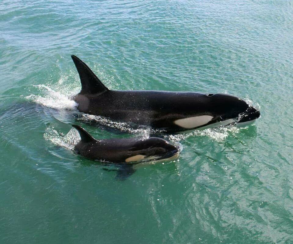 картинки киты акулы дельфины выходит это слишком