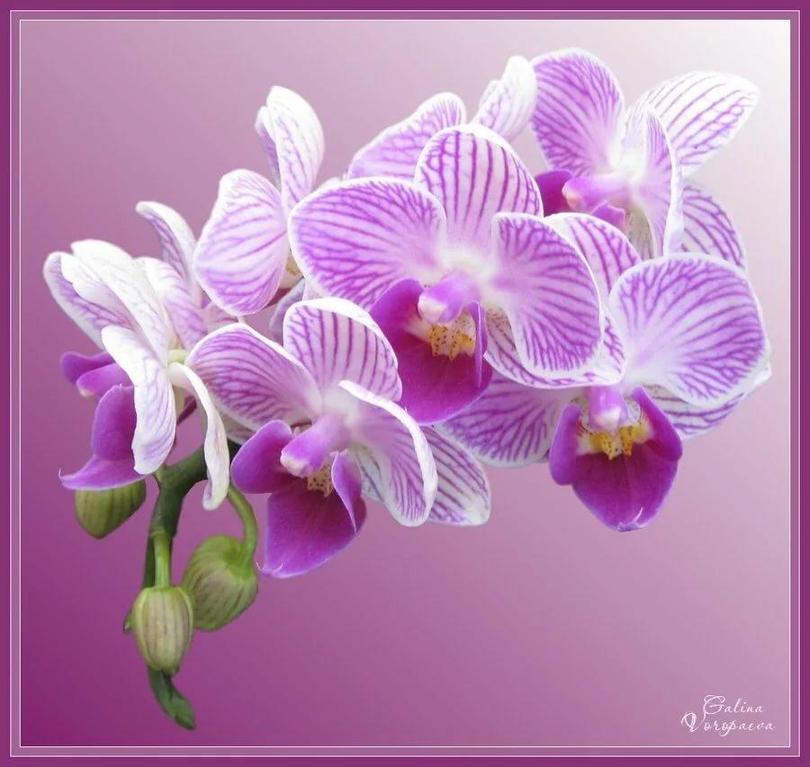 поздравление юбилей орхидея испеките