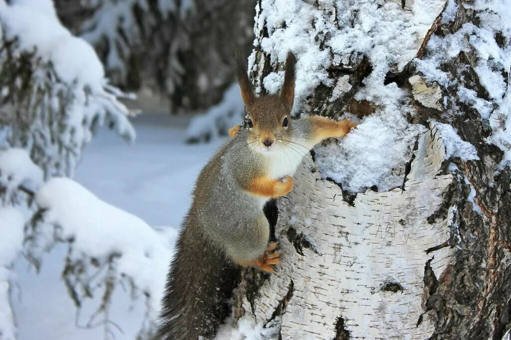 картинки животных в зимнее время года легенде