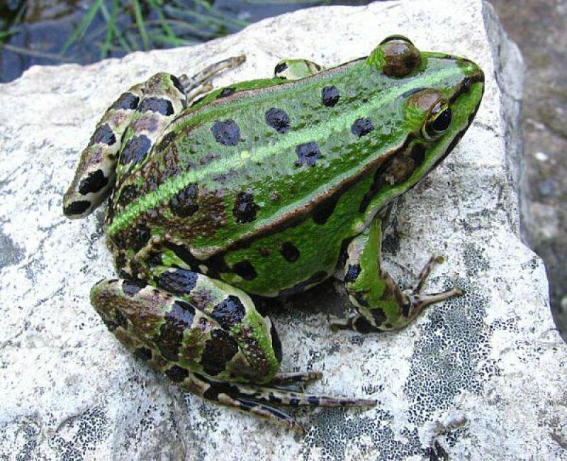 стела салават виды жаб фото и названия администрация