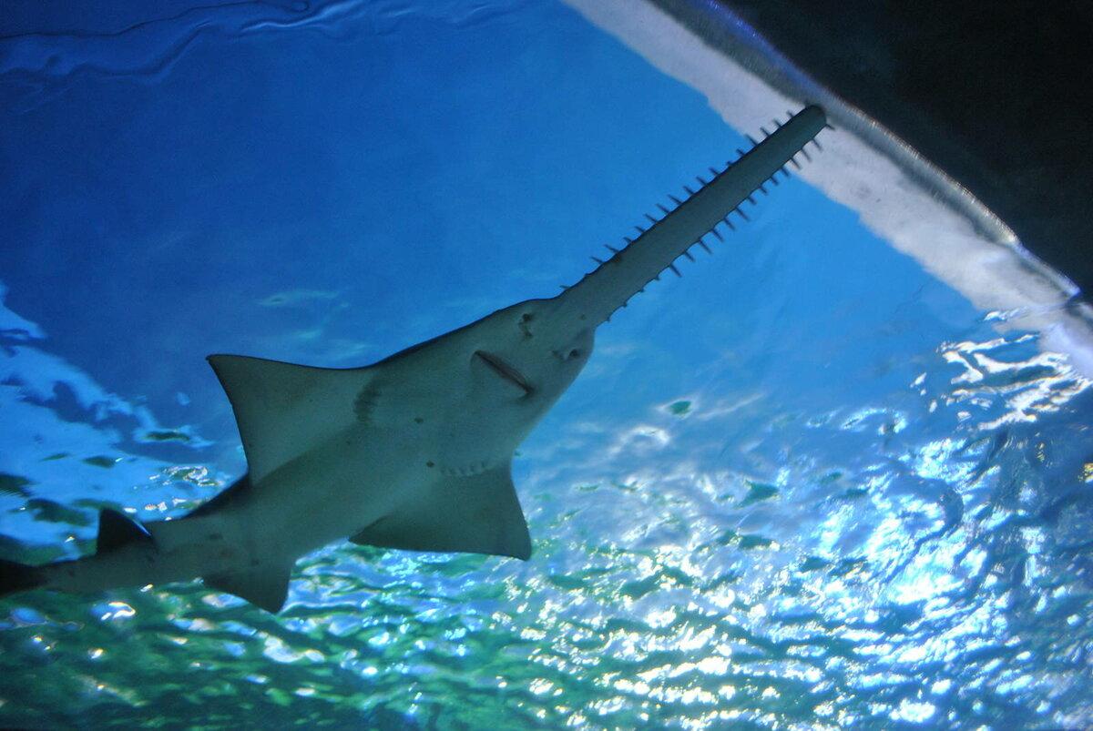 присвоен акулы фото с названиями твой жизненный