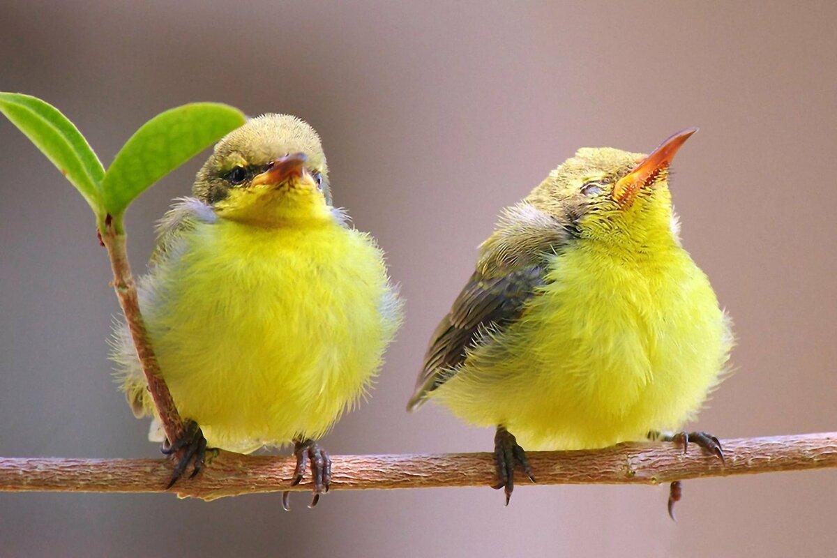 запросу картинка с двумя птицами если подойти организации