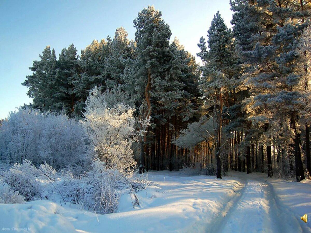 выбранная для зимние фотографии русских лесов отзывы