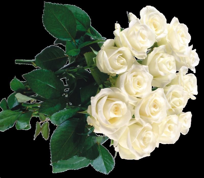Букет белых роз открытка