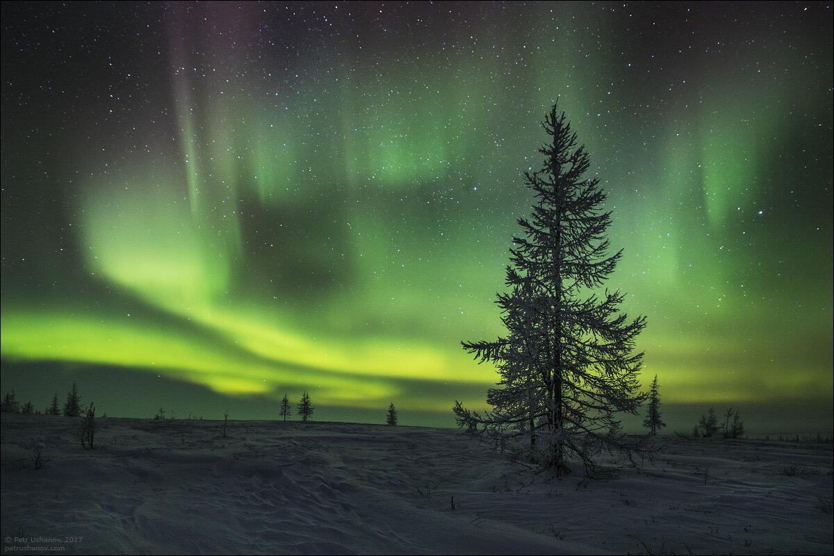Картинки полярной ночи в тундре