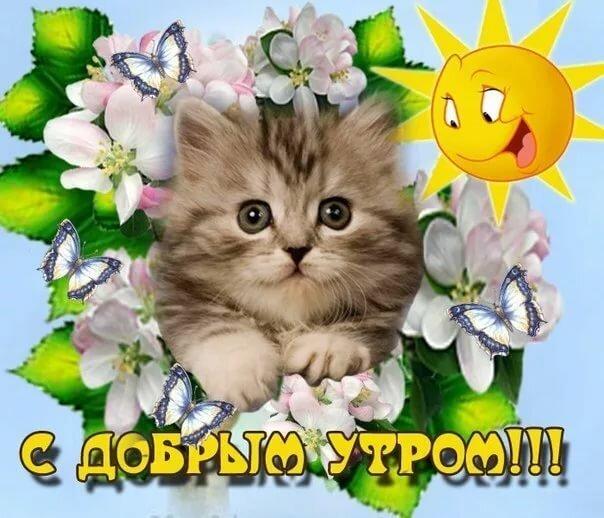 Картинки с надписью доброе утро котенок