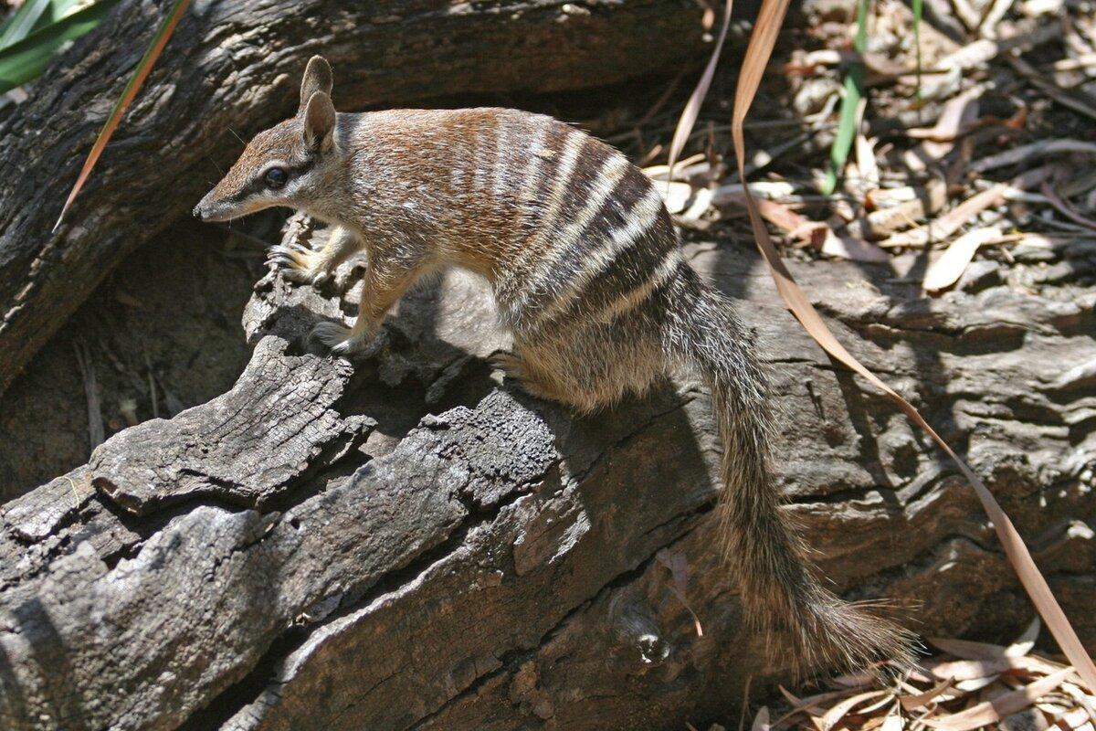 под животные обитающие только в австралии картинки обязательных параметров для