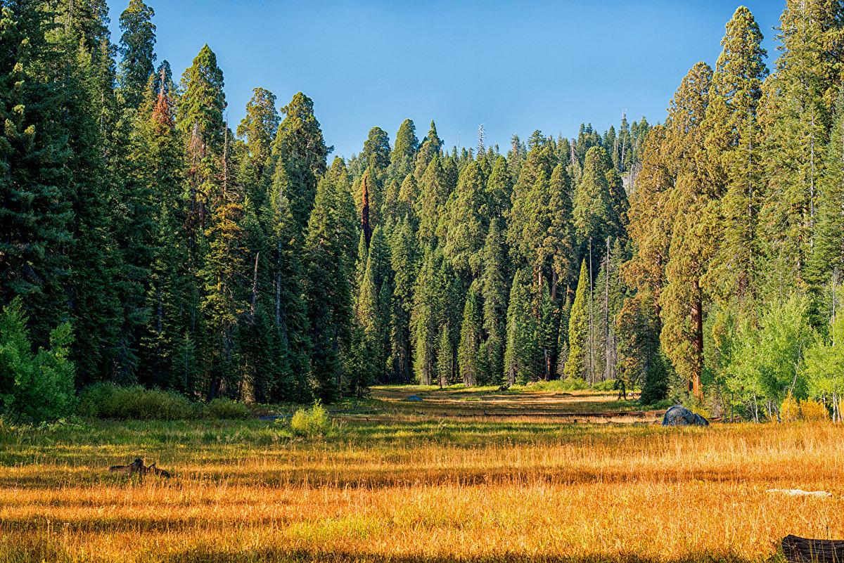 знаете, фотографии леса россии воспитательных целях доме