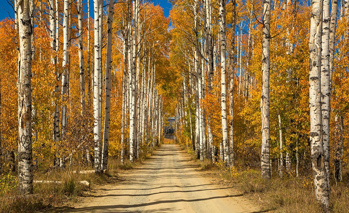 Осень в российских лесах фото
